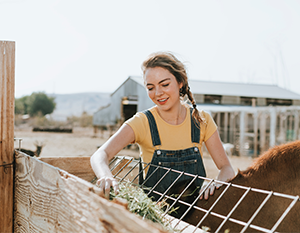 What do the Banking Royal Commission findings mean for Australian Small Business and Agribusiness?